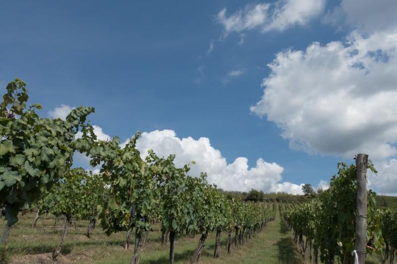 """トスカーナの自然で作られる """"キャンティワイン"""" ワイン好きは必ず訪れて!"""